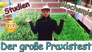 Wasserstoffperoxid + schnelleres Pflanzenwachstum, Keimung und Sprossenzucht